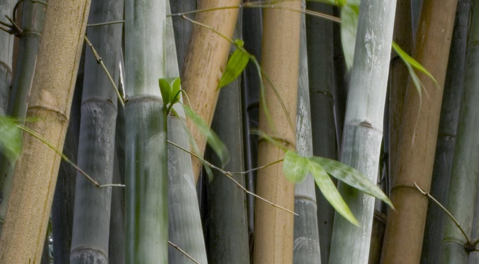 Bamboo_construction_sustainable_architecture_energreen_eco_bio