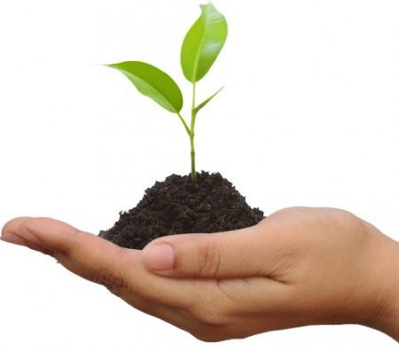 hand-leaves-energy-sostenibilidad-sostenibilità-barcelona